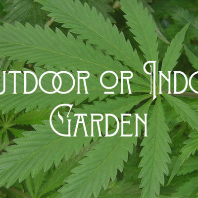 Outdoor or Indoor Garden marijuana laws marijuana growing