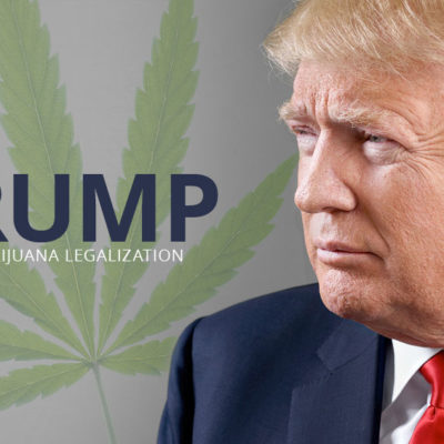 Trump on Marijuana Legalization marijuana knowledge marijuana economy
