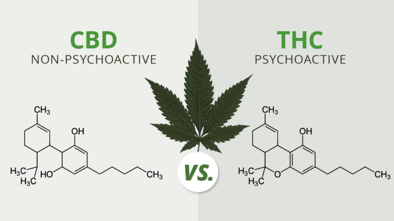 The Difference Between CBD and THC marijuana knowledge
